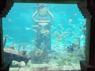 atlantis_bahamas_discover_tour_tours-fp-32071e70de14f2e7abbb1c283920aff2