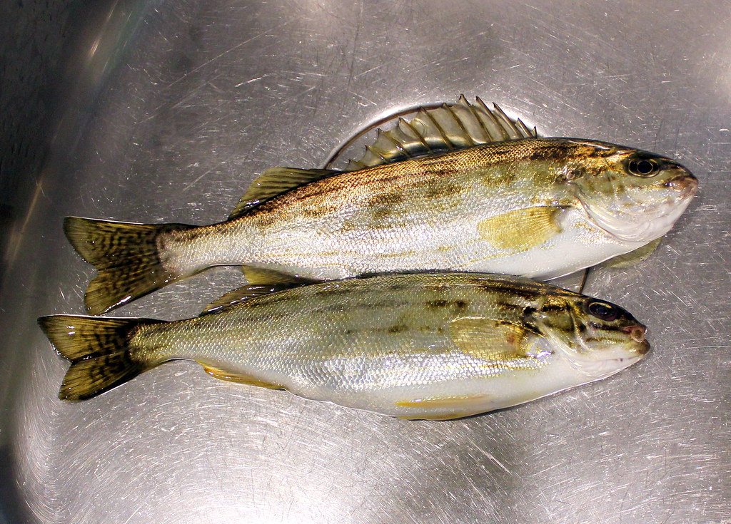 albany-fishing