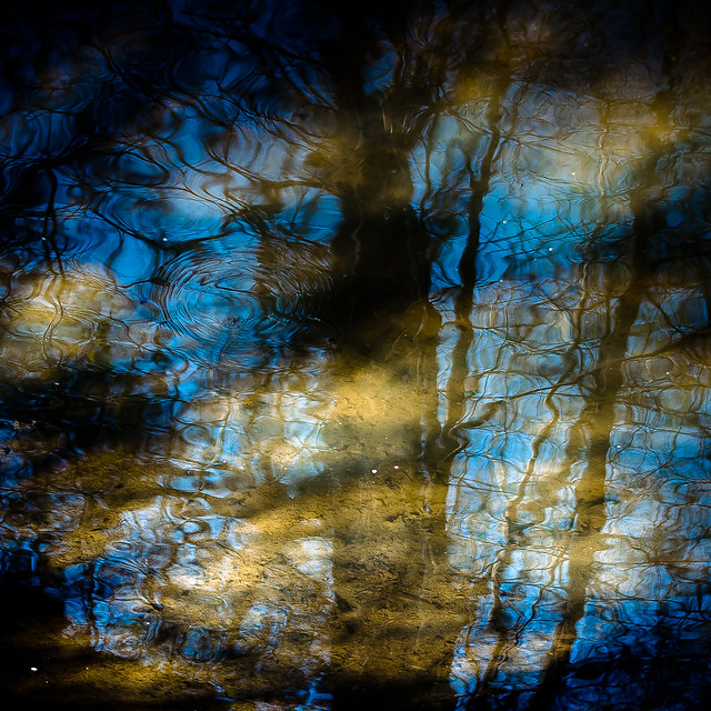 Trees In Water 117