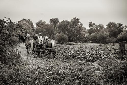 Amish DRE-3408