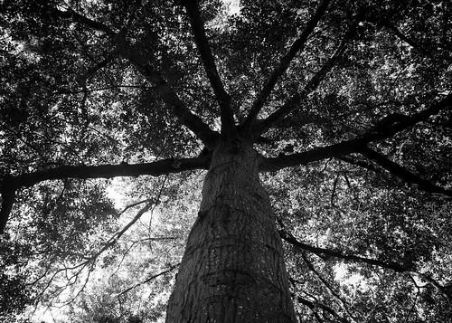 blackandwhite nature shade bw blackwhite