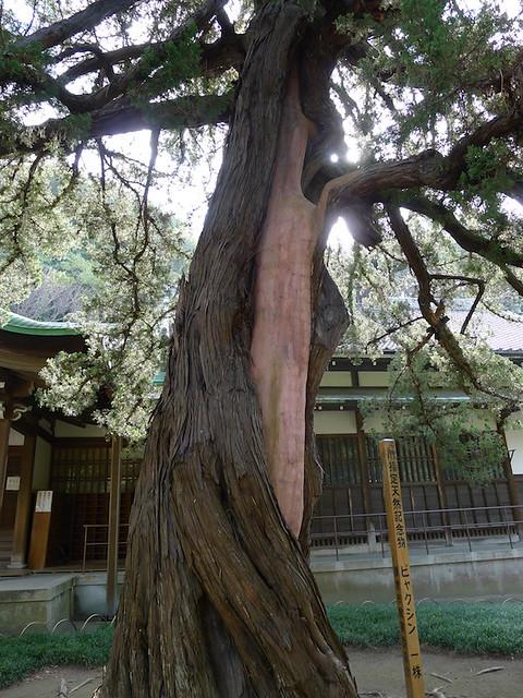 087-Kamakura