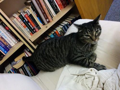 Shakespeare, on the mattress #toronto #shakespeare #cats #catsofinstagram #caturday