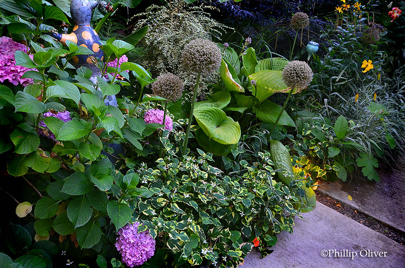 Beadell garden (Portland, OR)