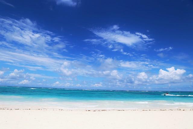 En el mar la vida es mas sabrosa/ In the sea life is sweeter.
