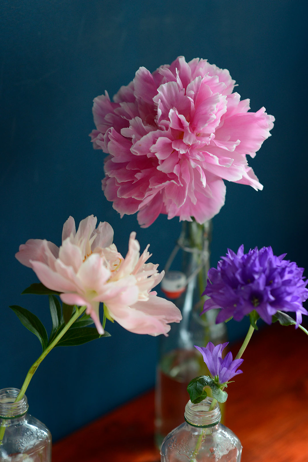 Peonies and clustered bellflower