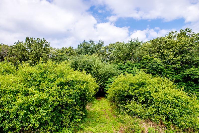 Ciurus Park Nature Preserve - July 19, 2017