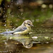 vogelhut2_juli-7412