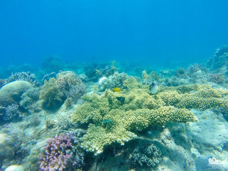 Cantagay Marine Sanctuary