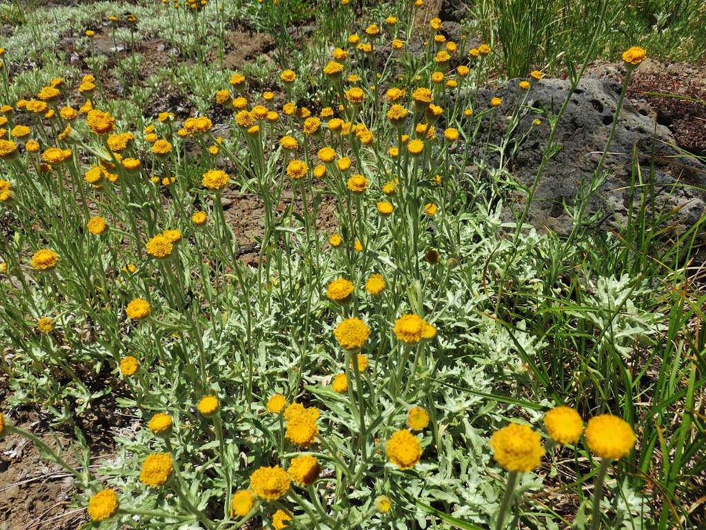 Wildflowers along the Grasshopper Trail
