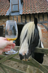 Horse has no interest in cider at Somerset Cider Brandy Company