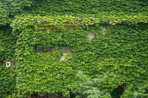 2017 500px bgphoto clouds coast evening horizon image imaging izumo japan japansea landscape photo photography shore summer sunset tumblr bellphoto lighthouse 中國地區 山陰 岩石 島根 攝影 日御碕 日本 日本海 日落 本州 松島 海岸 燈台 燈塔 經島 風光 風景 黃昏