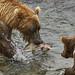 Brooks Camp, Katmailand NP, Alaska by swissukue