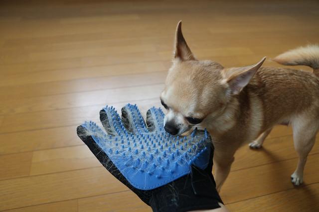 ショップジャパン ペット用ラバーブラシ トゥルータッチ