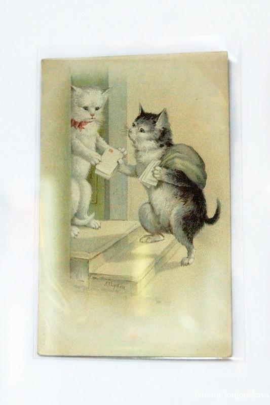 Старая открытка с изображением котов