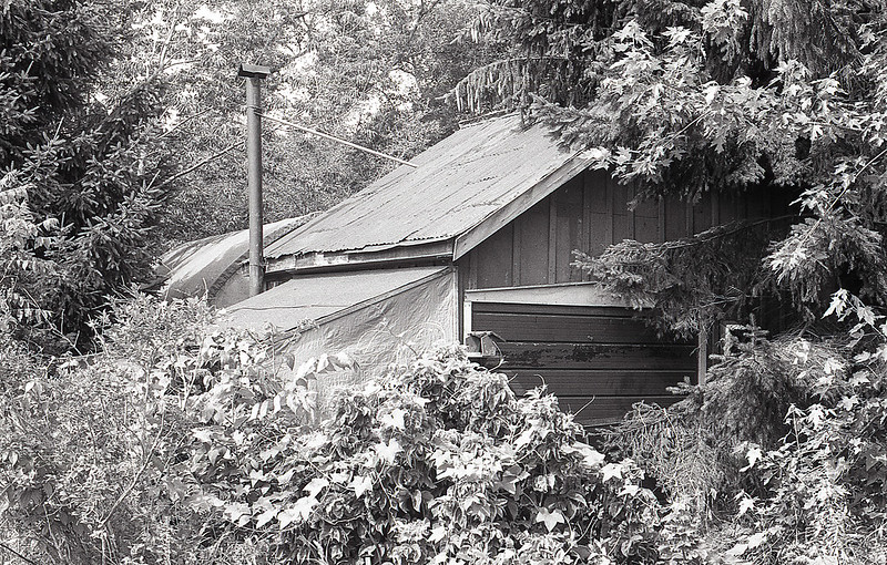 Overgrown Garage_