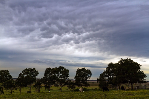 Shelf &  Mammatus