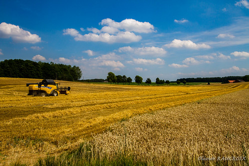 06000000 06007000 environnement iptcnewscodes iptcsubjects nature champ ciel environmentalissue moisson moissonneuse nuage paysage ittre wallonie belgique be