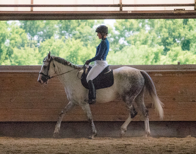 20170709 Grif Dressage Tests