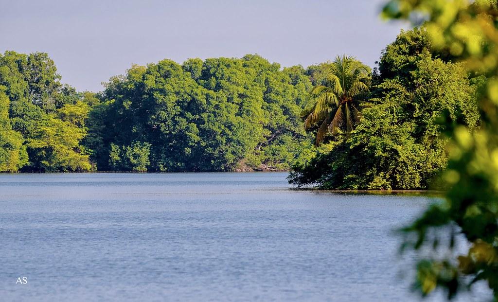 Ramal de Laguna Los Micos, Tela, Honduras.