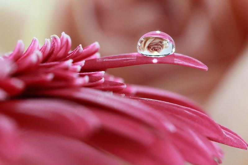 dew-flickr01