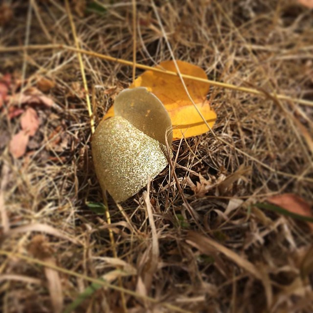 Spotted at the dog park: half of a glitter egg. My magpie talents strike again! ✨✨✨