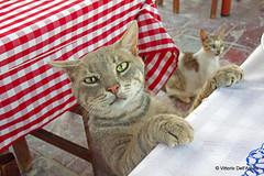 "Chios - Katarraktis - Gatto ""invadente"" - ""Intrusive"" cat"
