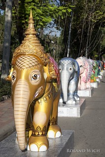 Bangkok Elephants II