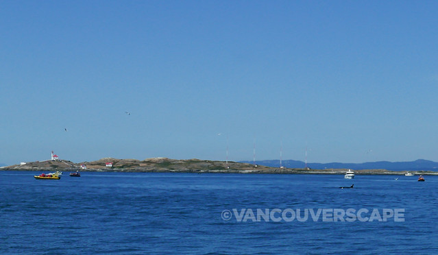 V2V Empress/Whale spotting