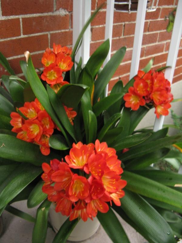 Autres plantes chez Cloo 35710068512_8cd7e9c465_o