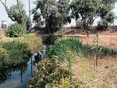 Rio Hondo Bosque Restoration