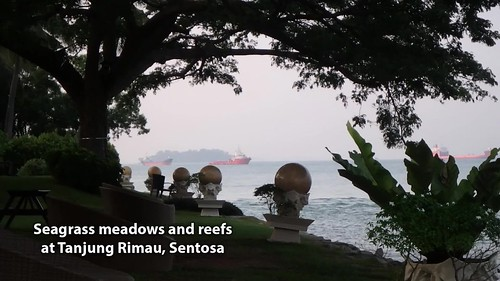 Living seagrasses and reefs of Sentosa Tanjung Rimau