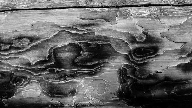 Driftwood Log Texture 1