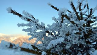 Frozen Branch on Stara Planina mountain, Serbia