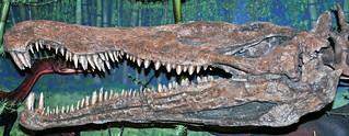Redondasaurus bermani (fossil reptile) (Upper Triassic; New Mexico, USA) 1