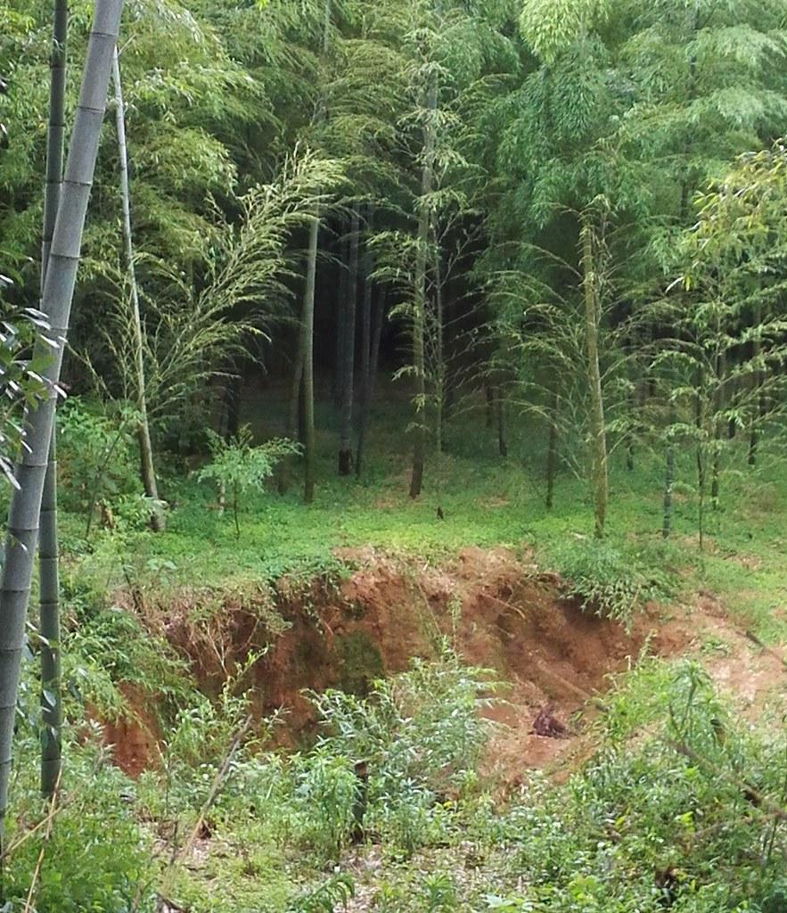 竹藪に謎の穴