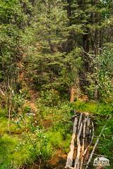 Hiking Whitegoat Falls Trail