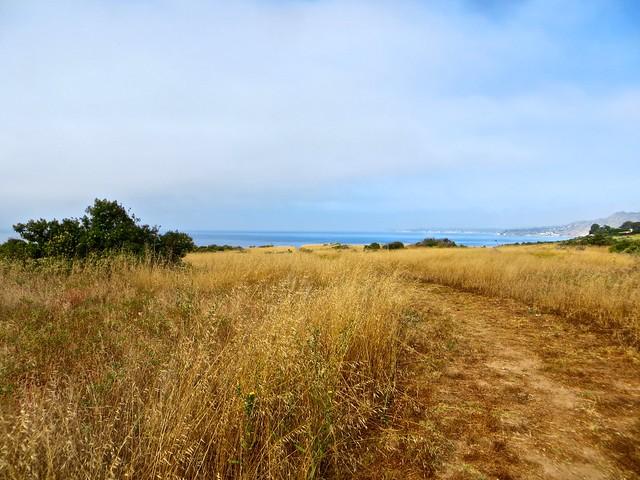 california crisp