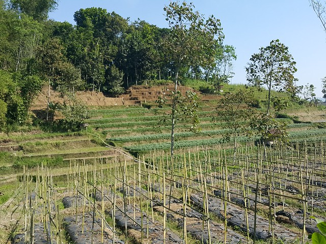 East java definition meaning for Terrace farming meaning
