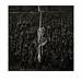 Rope. Cromer, Norfolk. by Paul Greeves