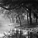 Spring Lake 1993