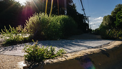 Cedar Springs