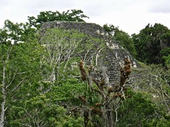 Tikal Great Pyramid Side View