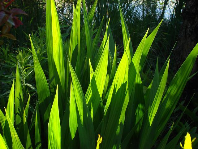 Green symphony., Sony DSC-H9