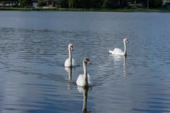Lake Morton-26.jpg