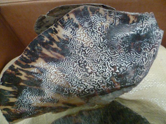Saisie d'écailles de tortues protégées à Roissy