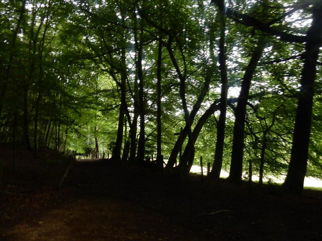 Trees Dorking Circular