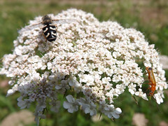 Bugs in Devon