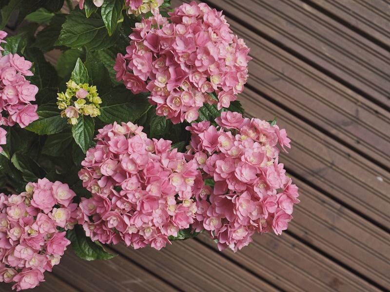 flowers-kukkia-kesä-suomenkesä