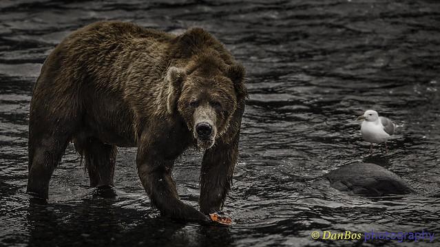 Bears Friendship